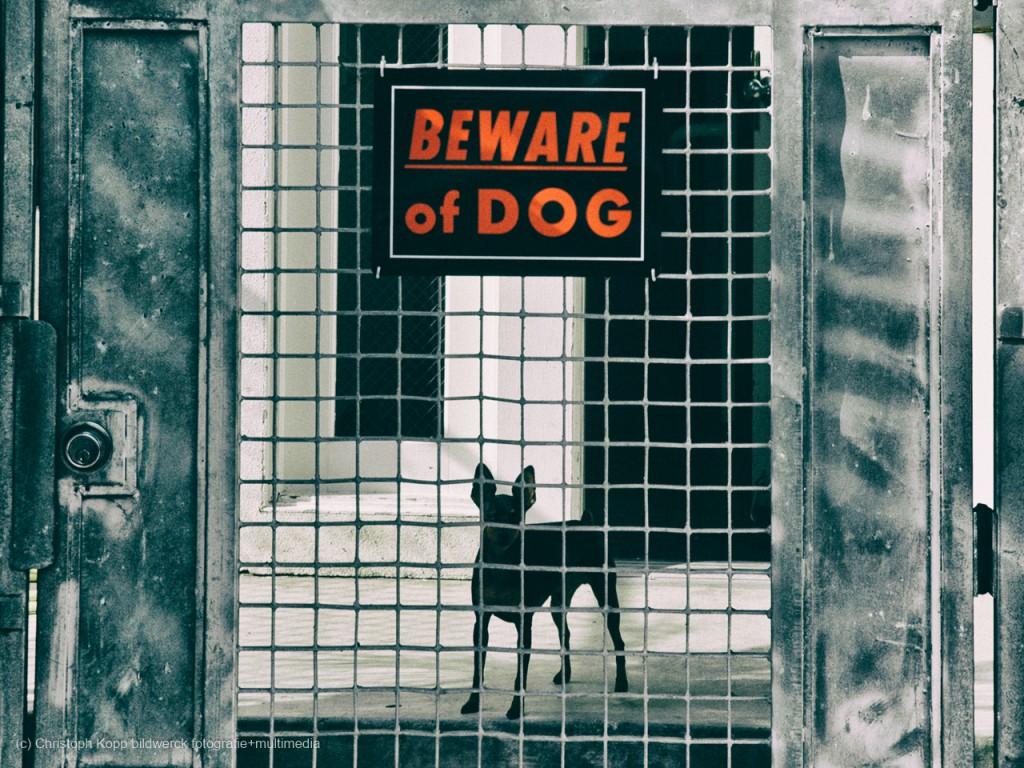 Beware of Dog (Los Angeles, CA)